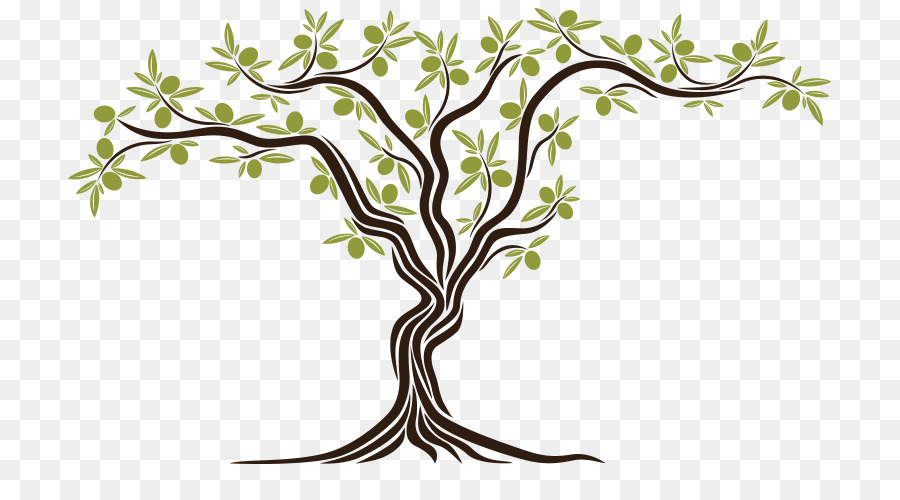 Olive oil Tree Israel Bible.