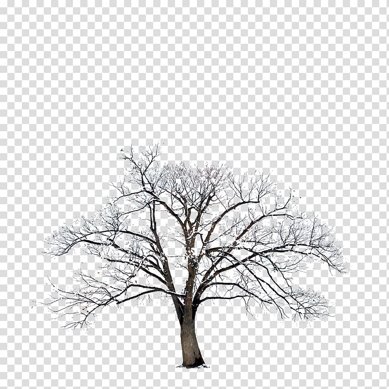 Bible Winter, tree transparent background PNG clipart.