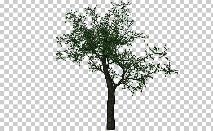 Trees photoshop clipart clipart images gallery for free.