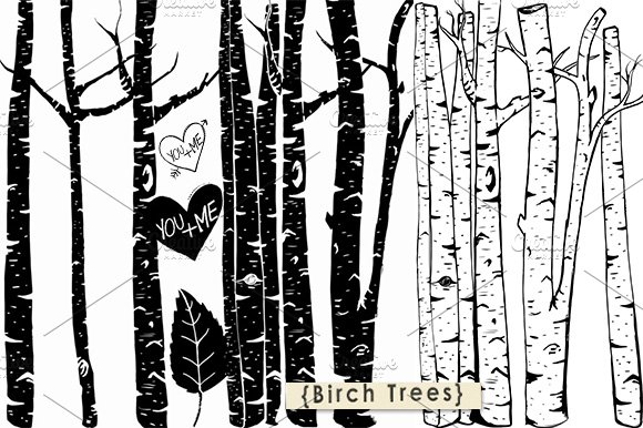 Birch Tree ClipArt + Photoshop Brush.