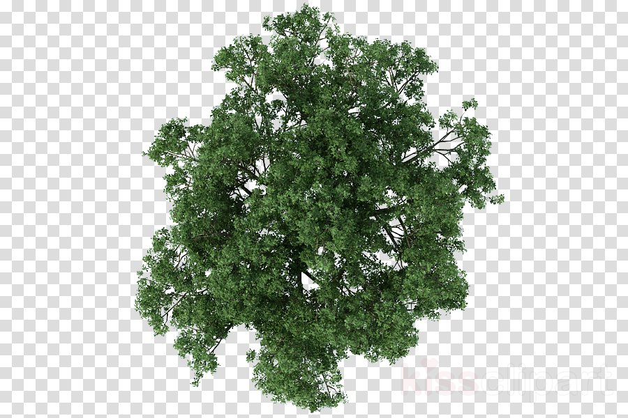 Tree Plan clipart.