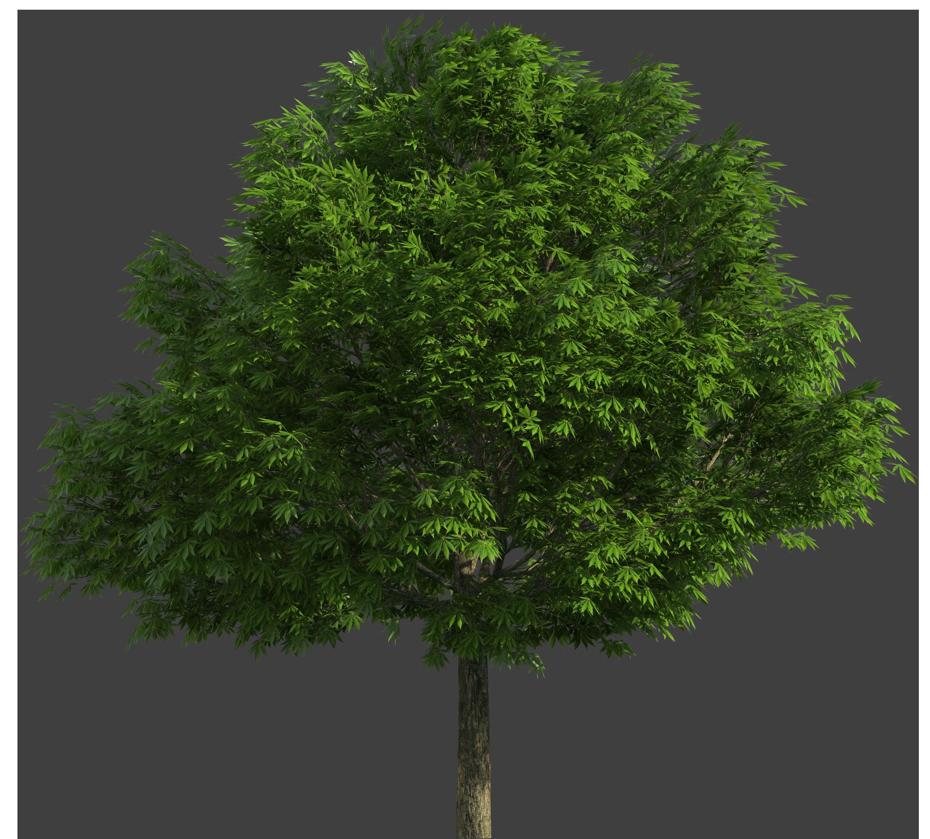 Realistic Tree PNG Clip Art.