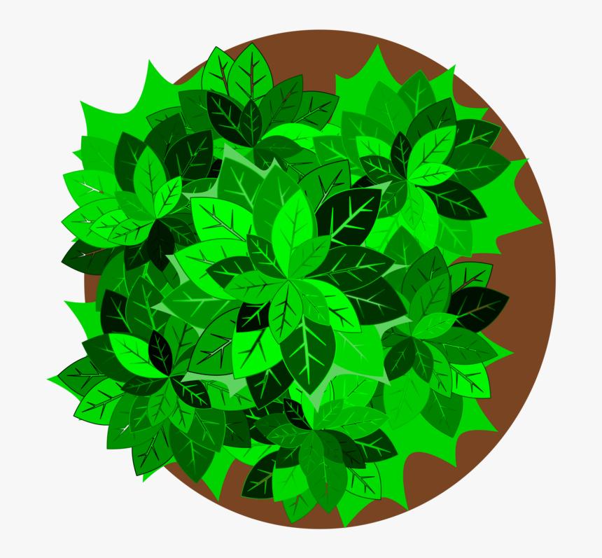 Plant,leaf,tree.