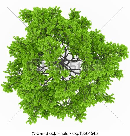Treetop Stock Illustrations. 605 Treetop clip art images and.