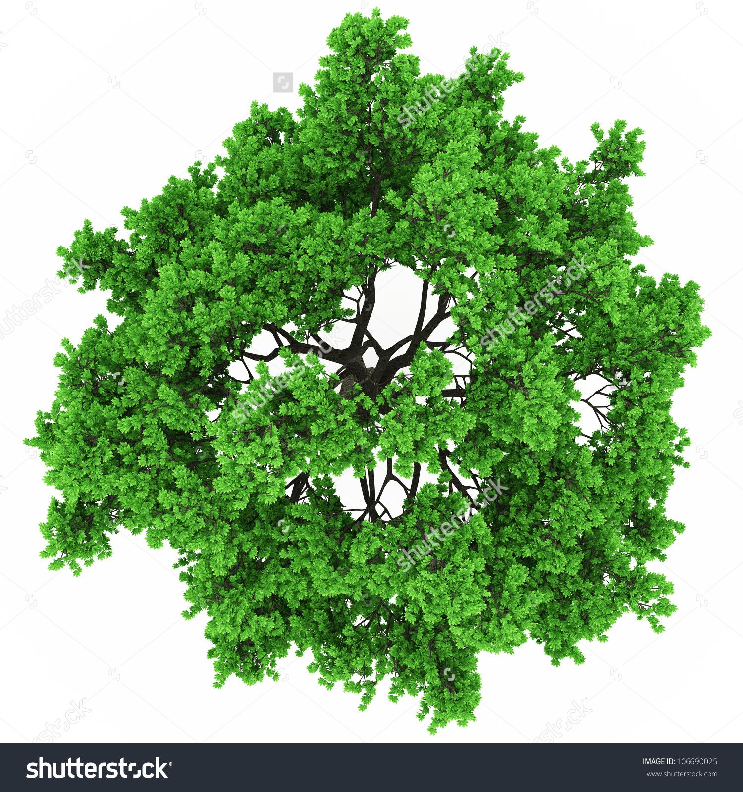 Free tree plan clipart.