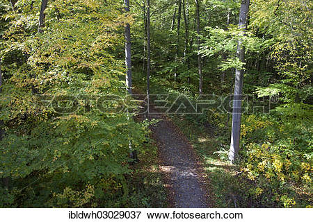 """Picture of """"View from a treetop path onto a forest path, Hainich."""