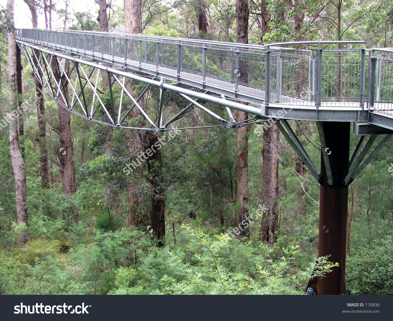 A Treetop Walk Path.