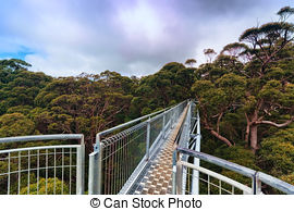 Treetop Stock Photos and Images. 5,618 Treetop pictures and.