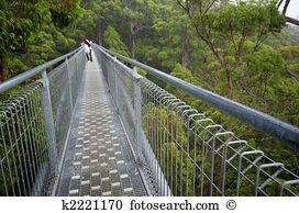 Treetop walk Images and Stock Photos. 191 treetop walk photography.