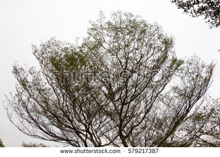 Treetop Stock Images, Royalty.