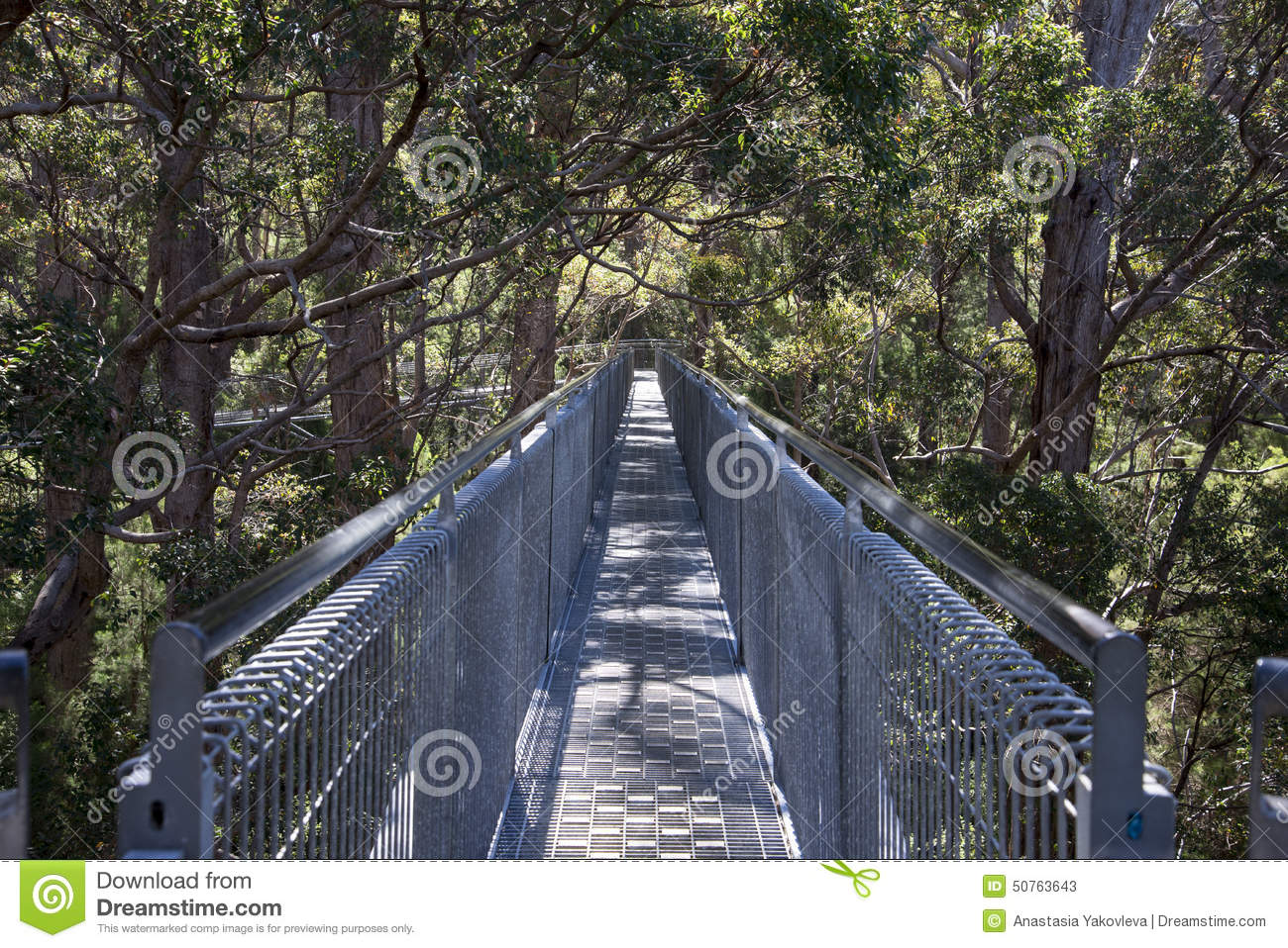 Tree Top Walk Bridge In The Valley Of The Giants Stock Photo.