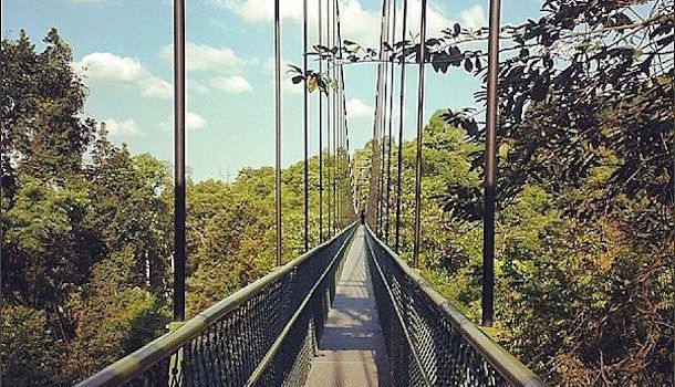 Macritchie Treetop Walk. & Treetop walk clipart - Clipground