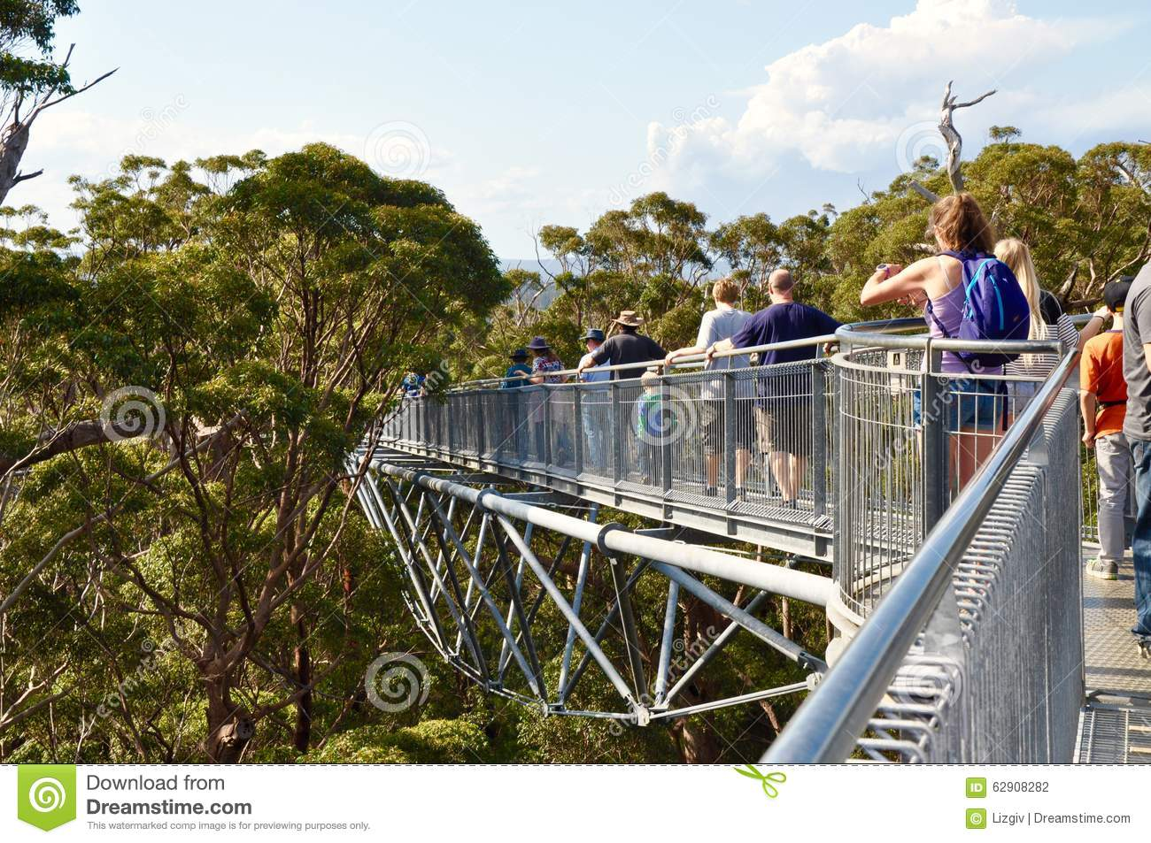 Tree Top Walk In The Tingle Tree Forest: Denmark, Western.