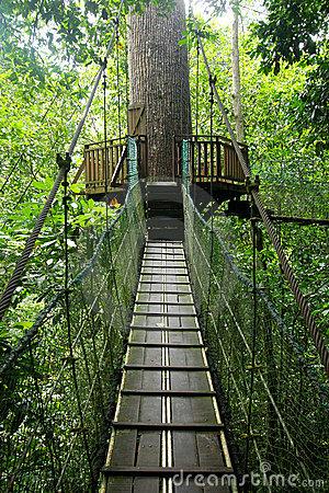 Canopy Walk Royalty Free Stock Photos.