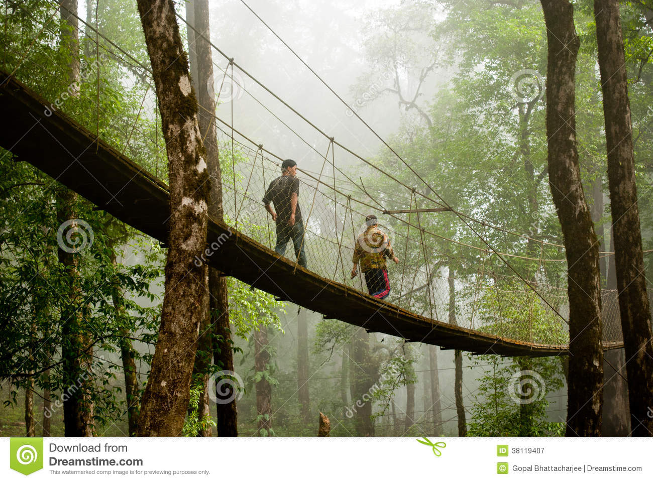 The Canopy Walk Way Editorial Photography.
