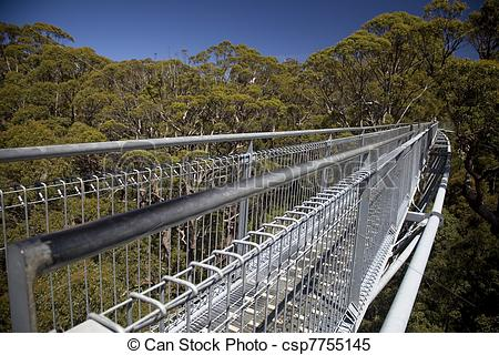 Stock Images of Treetop walk.