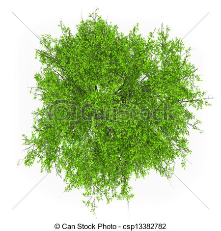 Tree top Stock Photos and Images. 63,732 Tree top pictures and.