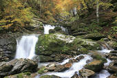 Picture of Stream flowing through forest, Traufbach, Trettachtal.