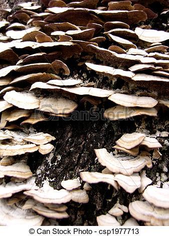Stock Photos of Tree Fungus.