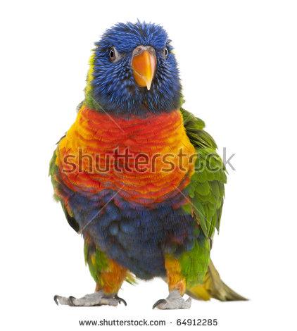 Trichoglossus rainbow clipart #13