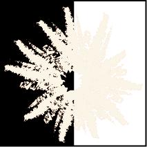 Clitocybe nebularis.