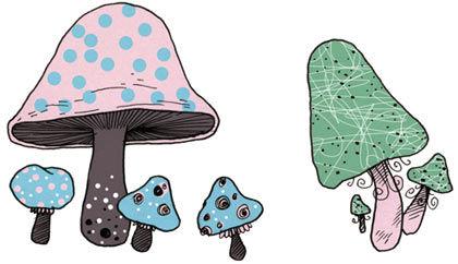 Na, bist du ein Giftiger? Die Handreichung zur Pilzsaison.