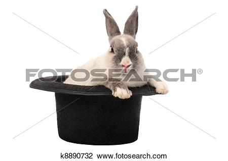 Stock Photo of Rabbit Trick k8890732.