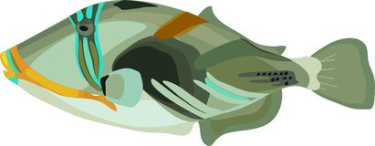 Triggerfish Stock Illustrations.