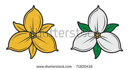 Trillium Flower Stock Images, Royalty.
