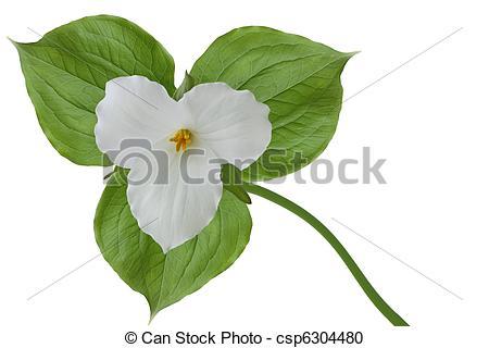 Trillium Flower Clipart Clipground