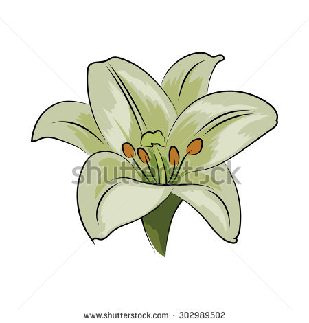 Gold Natural Trillium Flower Ontario Canada Stock Vector 71820418.