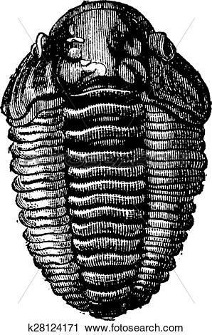 Clipart of The king of primordial seas, Trilobite Calymene.