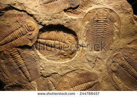 Fossil Stock Photos, Royalty.