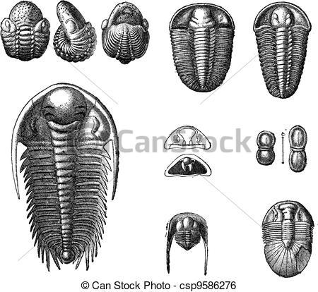 Clip Art Vector of Trilobites, vintage engraving..