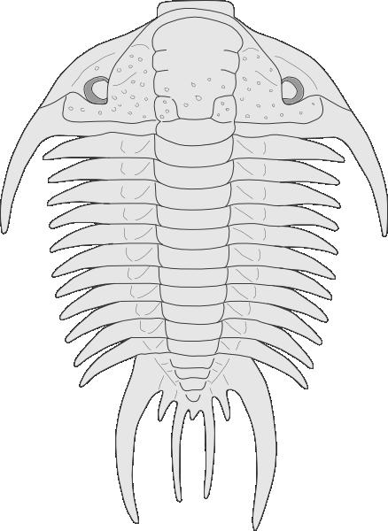 Fossil Of The Asaphus Species Clip Art at Clker.com.