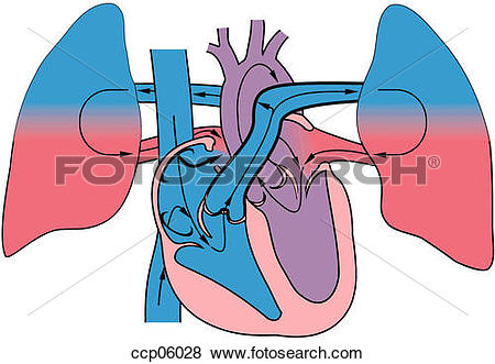 Stock Illustration of Trilogy of Fallot ccp06028.