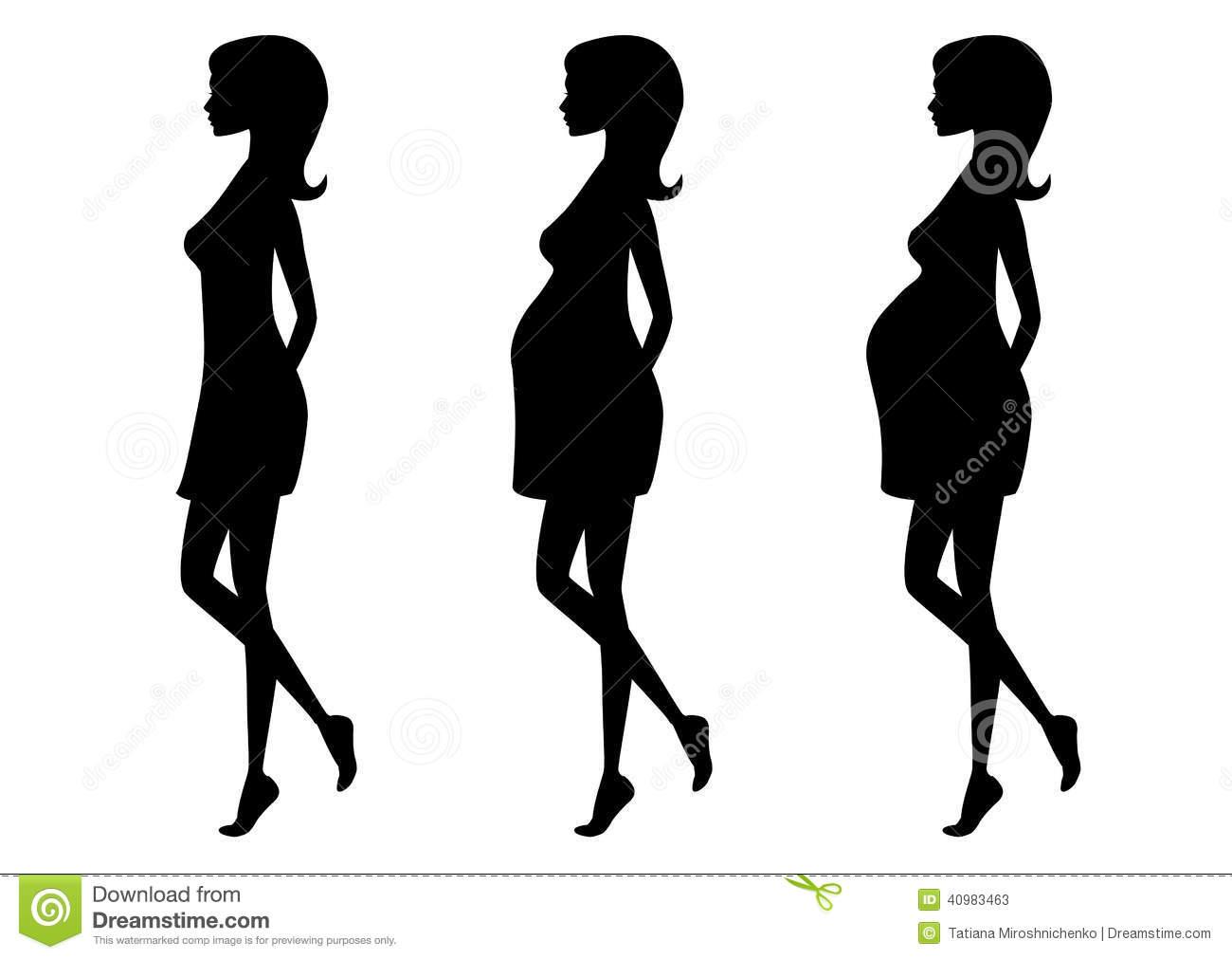 Trimester Stock Illustrations.