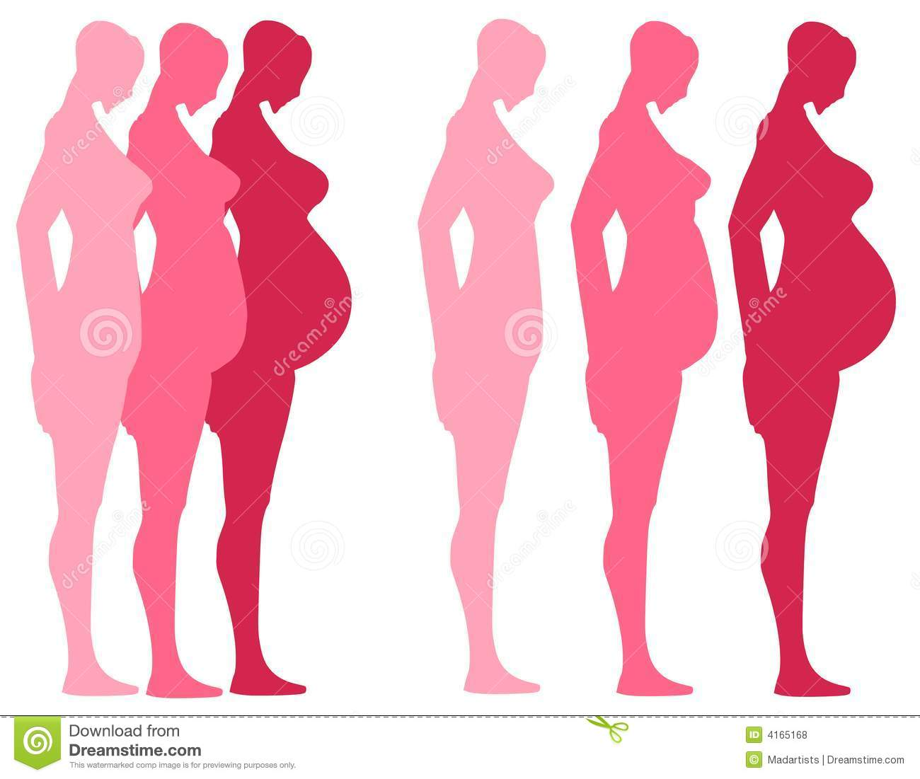 3 Trimesters Of Pregnancy Royalty Free Stock Photos.