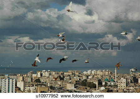 Stock Photo of Lebanon, Trablos, Tripoli, city, sea, pigeon.