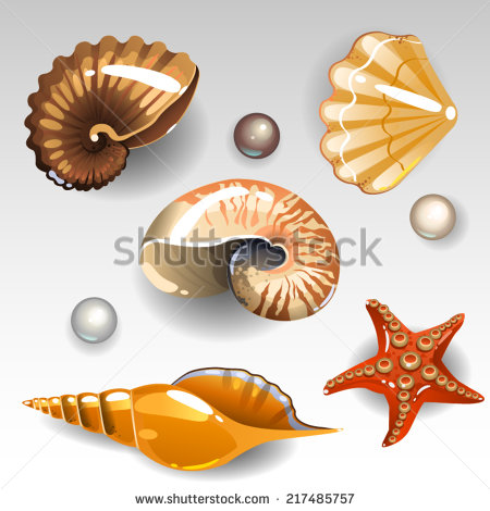 Triton Snail Stock Photos, Royalty.