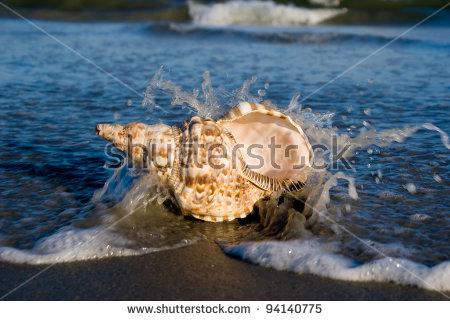 "triton Snail"" Stock Photos, Royalty."