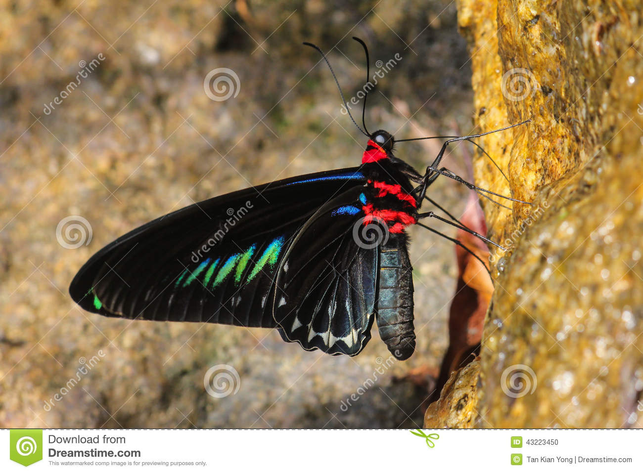 Colorful Butterfly On Salt Lick.