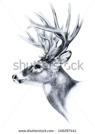 83 best images about [ observation drawings ] animals on Pinterest.