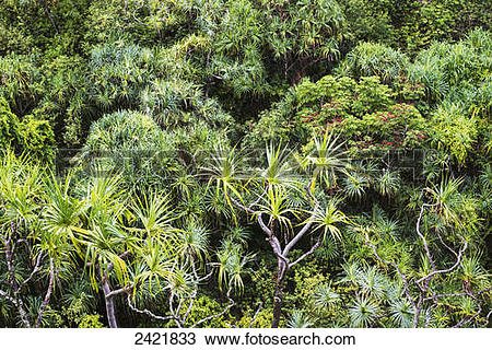Stock Photo of Tropical plants grow in lush profusion along the Na.