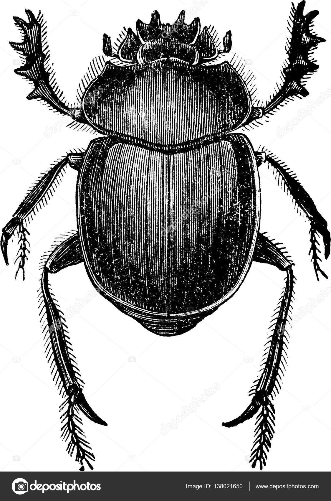 Vintage clipart beetle scarab — Stock Photo © unorobus.gmail.com.