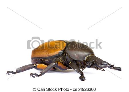 Stock Photography of Tropical Rainforest Beetle.