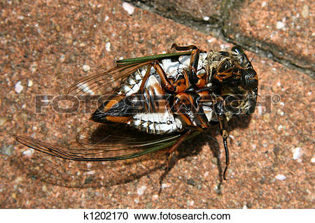 Stock Photography of Tropical Beetle Lying on its Back, Japan.