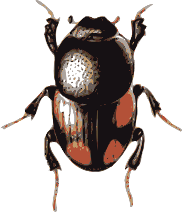 Free vector graphic: Beetle, Insect, Bug.