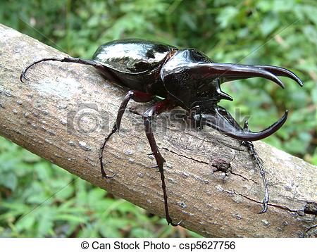 Stock Image of Tropical Rainforest Beetle.