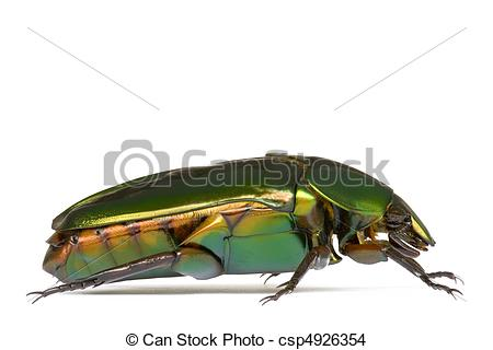 Stock Photo of Tropical Rainforest Beetle.